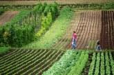 ДФЗ изплати над 3 млн. лв. на дребните земеделски стопани за Кампания 2019