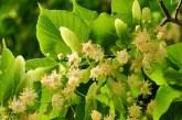 Алергичните към полени да се пазят от цъфтящи треви през следващите дни (СНИМКА)