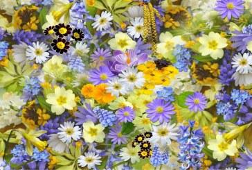 Поливайте цветята с този разтвор за буен растеж